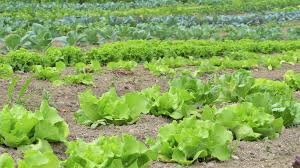 Plantas con fertilizantes